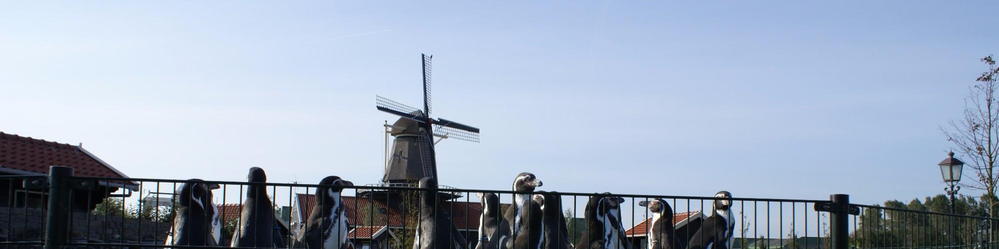 Van Blanckendeall Park - Tuitjenhorn.JPG